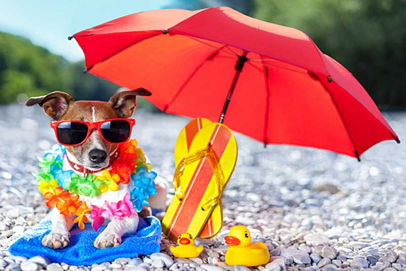 How to prevent your dog from heatstroke