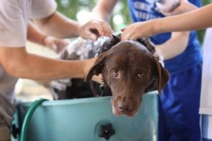 How to prevent your dog from heatstroke - Grooming