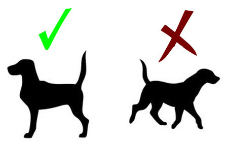 Posture to take dog measurments for dog harness