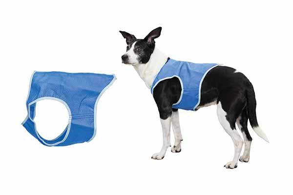 How to prevent your dog from heatstroke - Trixie Germany Cooling Vest