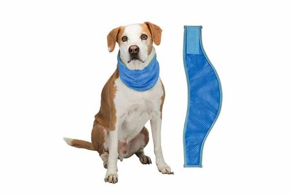 How to prevent your dog from heatstroke - Trixie Germany Cooling Bandana