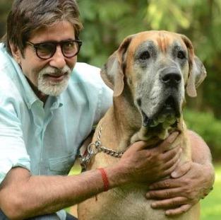 Bollywood Stars And Their Pets - Amitabh Bachchan