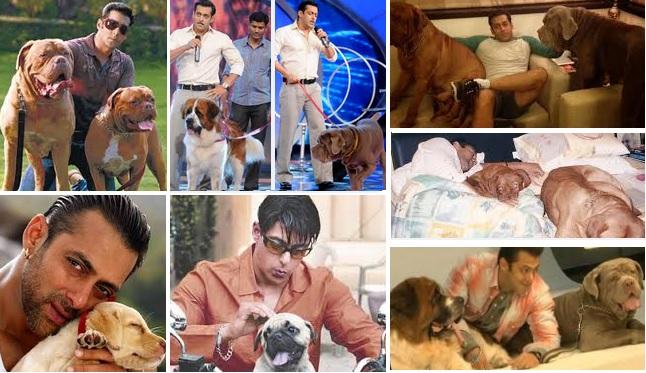 Bollywood Stars And Their Pets - Salman Khan